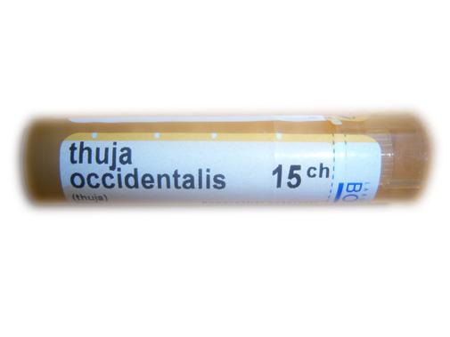 THUJA OCCIDENTALIS 15CH 4g *